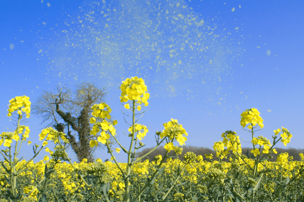 Hay fever and your diet
